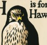 Non-fiction Book of the Month: H is for Hawk